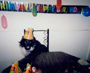 Photo of Skeeter with birthday party hat on